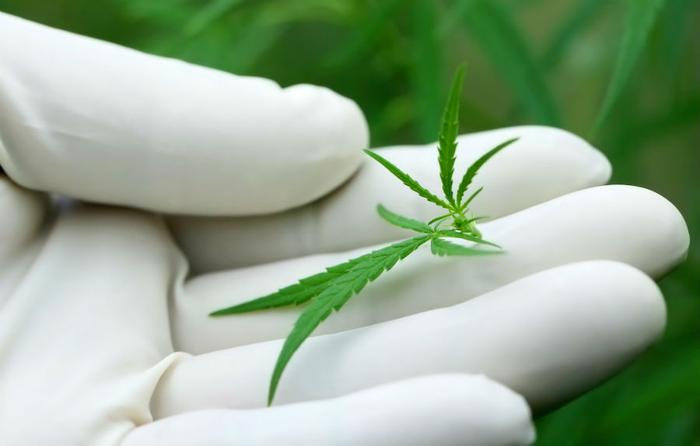 Louisiana could lose medical marijuana