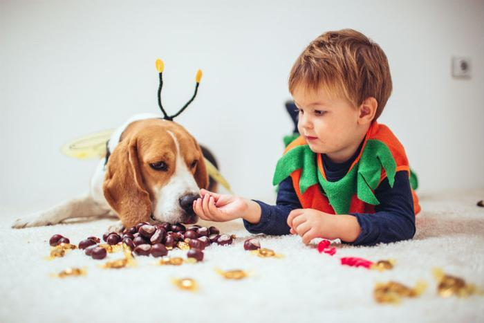 How Much Chocolate Is Toxic To Your Pet