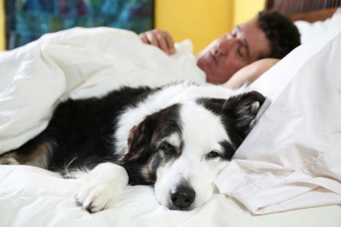 Want to improve Sleep Quality? Keep Your Pet in your Bedroom