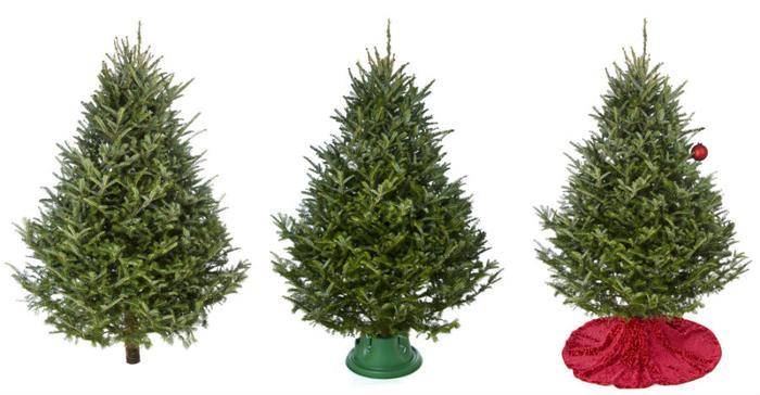 Amazon now selling live Christmas trees