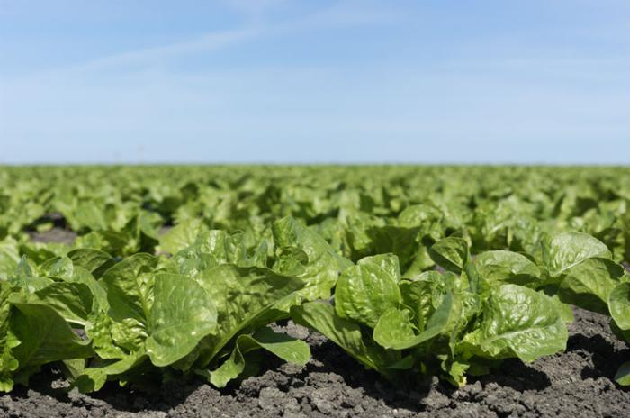 CDC: 9 more sickened in E. coli outbreak affecting romaine lettuce