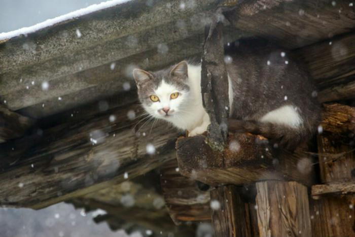 How To Keep Barn Cats Warm During Winter