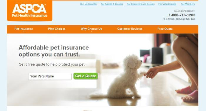 5 pet insurance providers who can help keep your furry ...