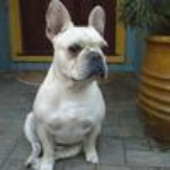 Pet Food Recalls and Warnings | Page 2Adkins