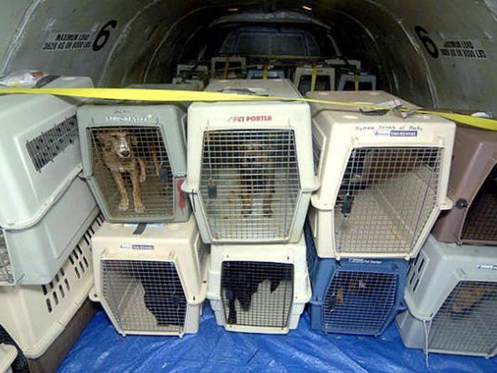 Animal lovers warn against shipping pets as cargo but for Air travel with dog in cabin