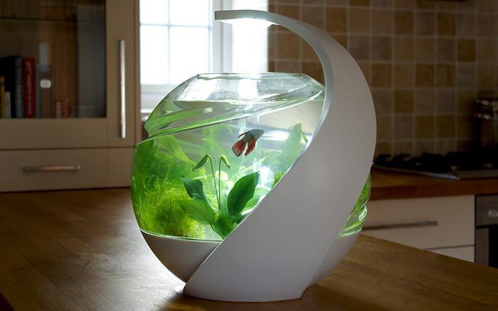 New fish tank claims to keep fish alive without water changes