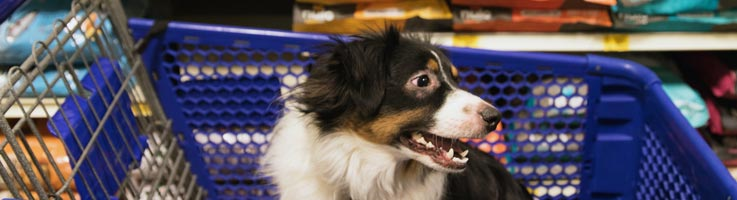 Best Grain Free Dog Food Consumeraffairs