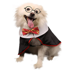 Harry Potter costumer for dog
