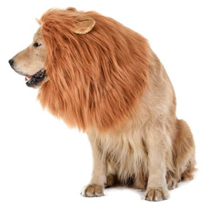 Lion costume for dog
