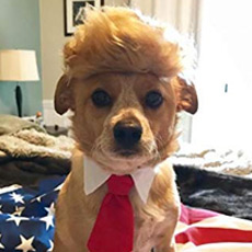 Trump wig for small dog