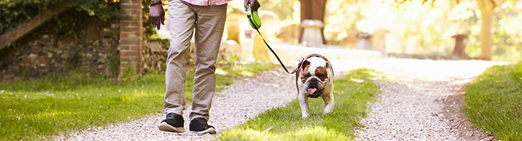 Best Dog Food For Weight Loss Consumeraffairs