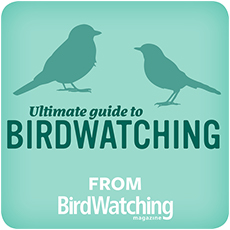 ultimate-guide-to-birdwatching