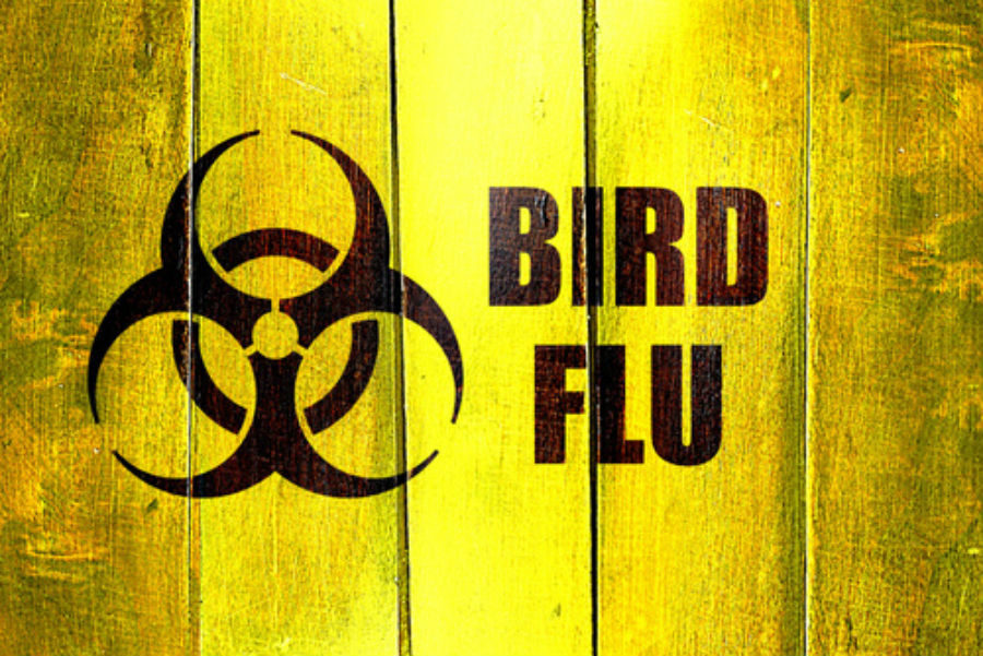 essay on bird flu Essay on bird flu 1 purchase written essay papers online cold remedies: the us food and drug administration issued a public health advisory in 2008 that warns.