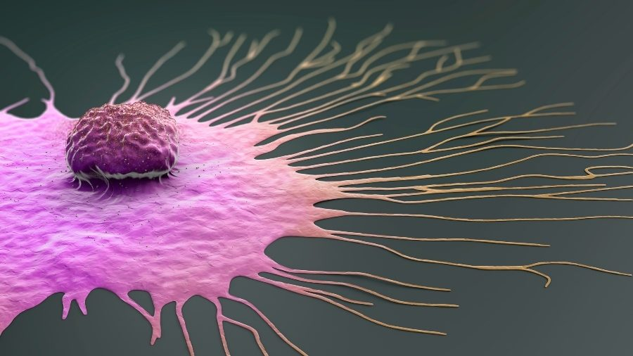 responsible breast cancer for Genes