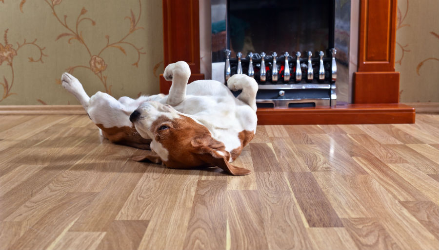 The best floors for your pet and your home for Hardwood floors good for dogs