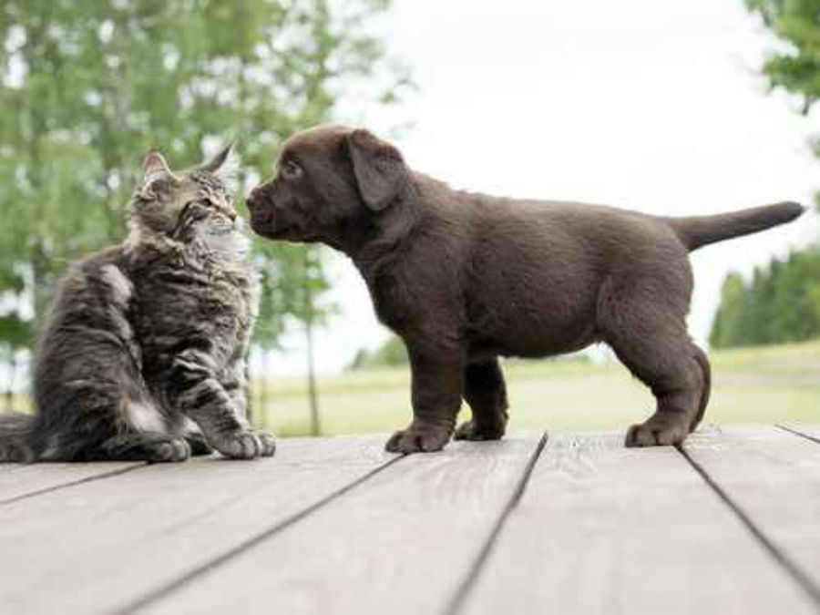 The Right Way To Introduce A New Pet To An Existing Pet