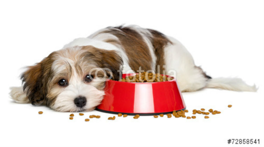 How To Make Your Puppy Eat His Food