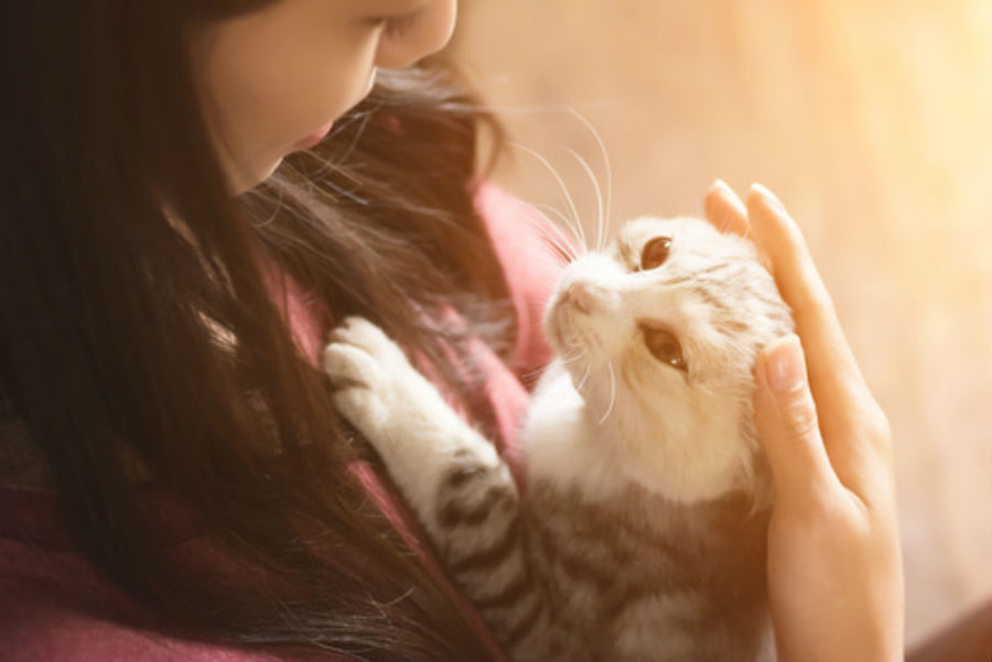 Cat people dating site