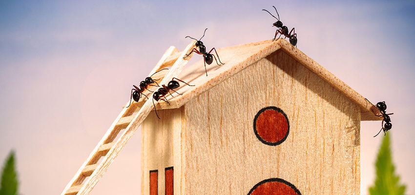 ants on house