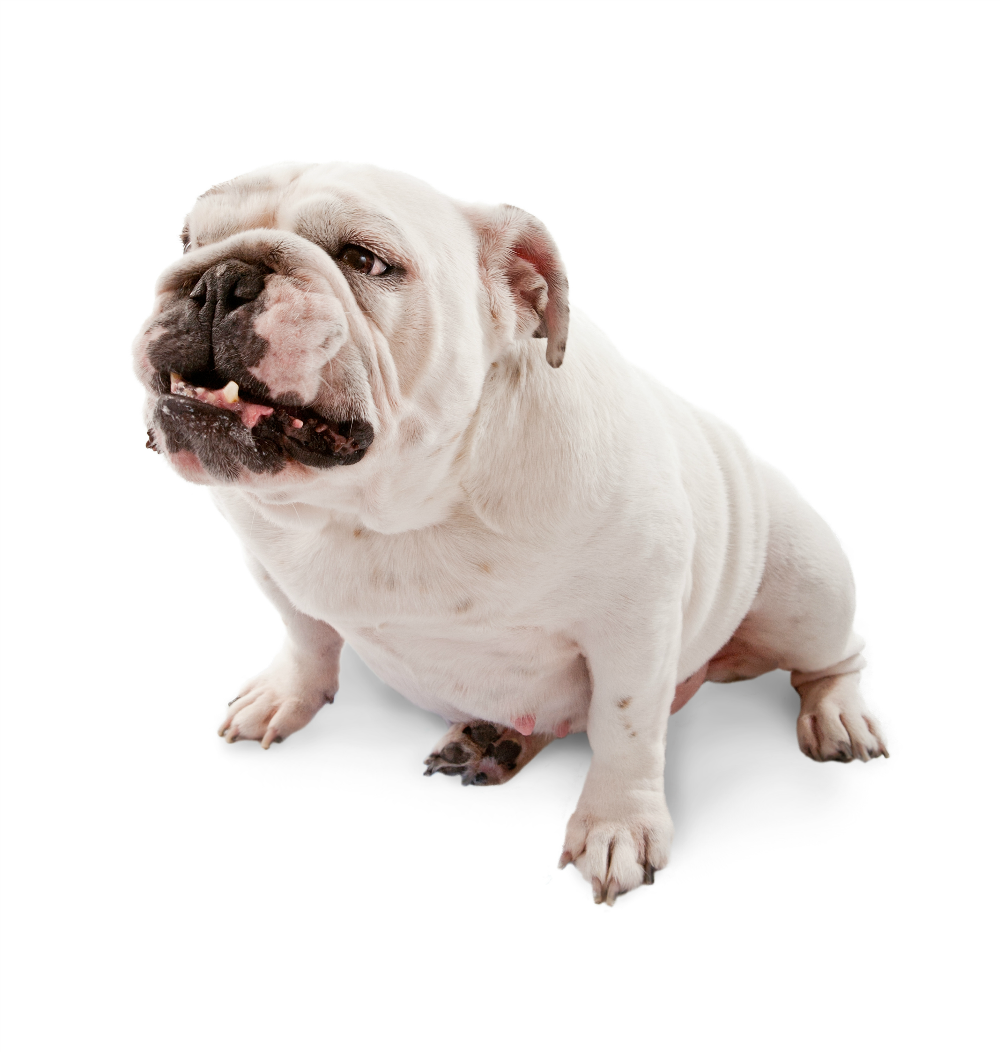 Liposuction for your dog