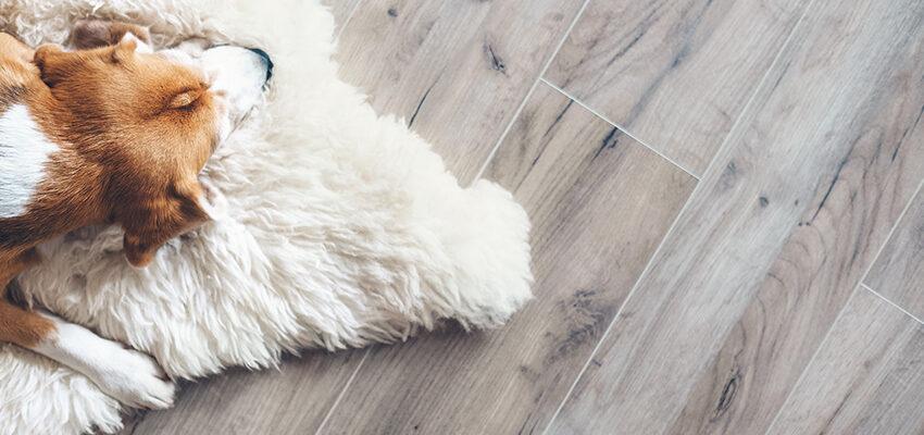 dog laying on rug on hardwood floor