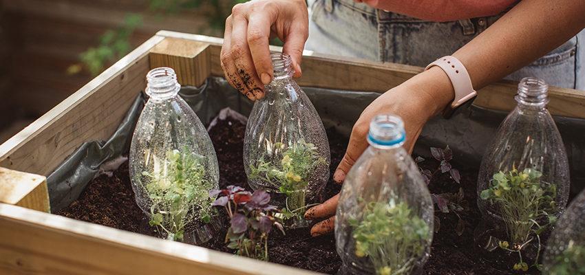 gardening water bottle plants