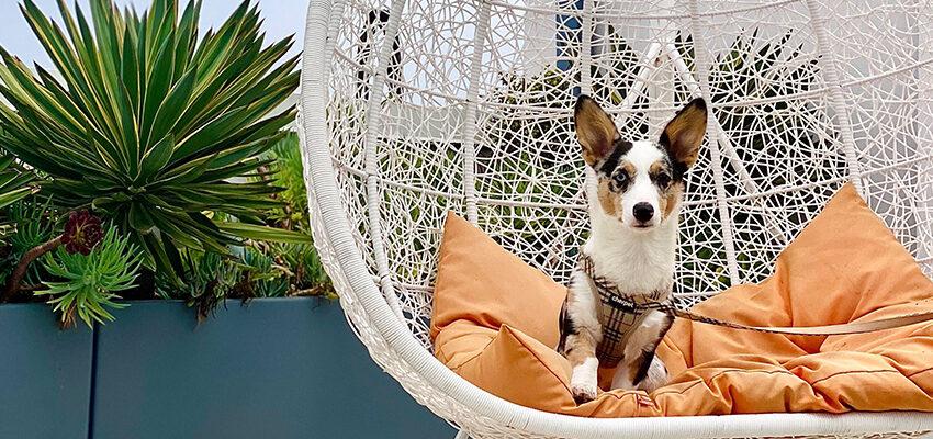 small dog sitting outside