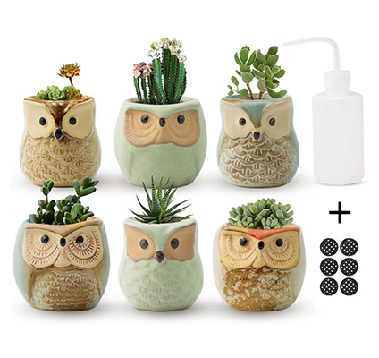 owl planters with succulents