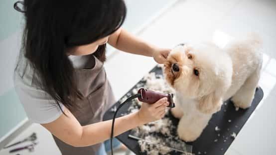 Pet Care Companies