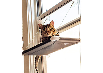 window perch