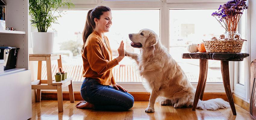 woman high fives dog