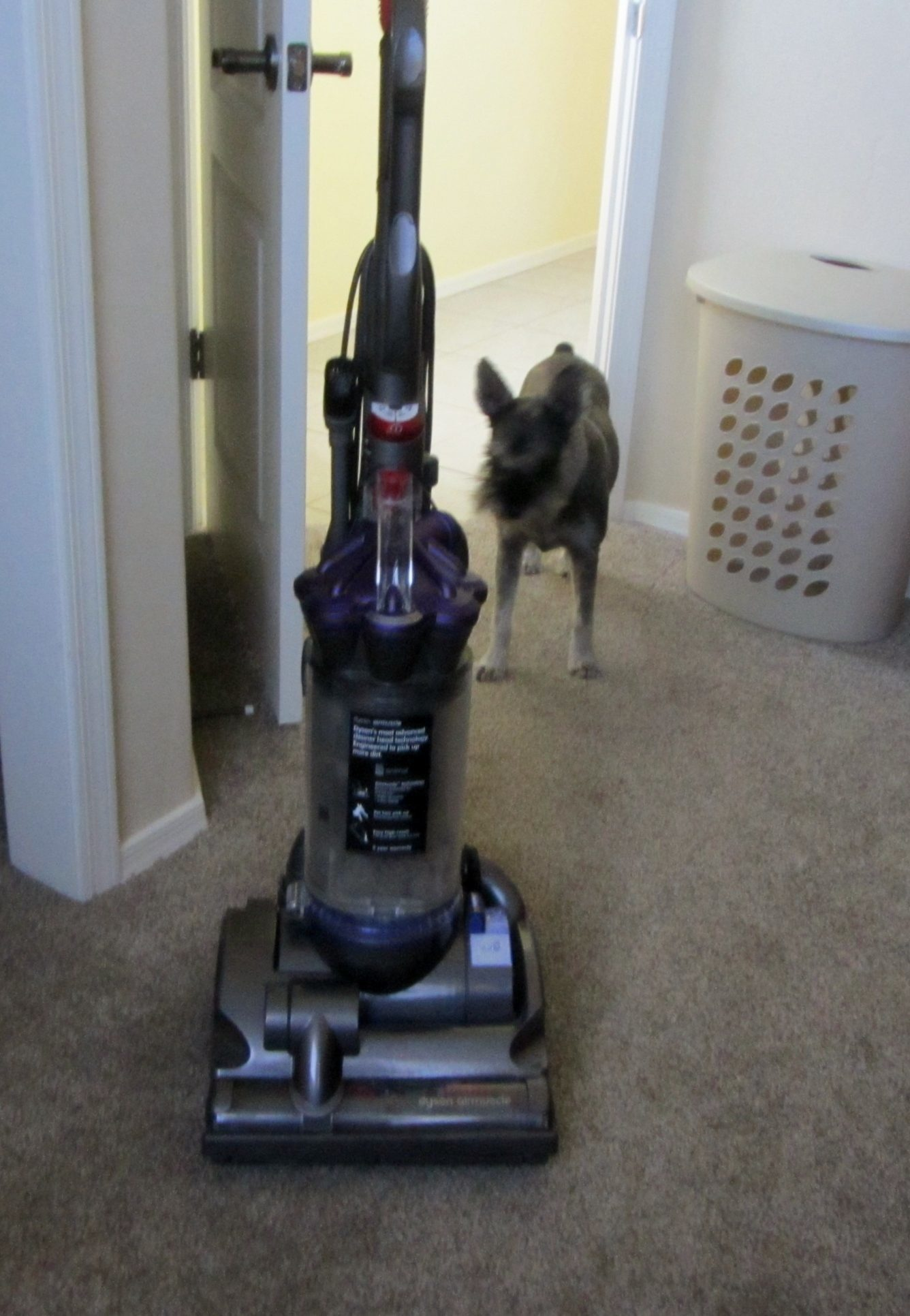 dyson vacuums images i purchased the dc28 and bought it due to great reviews from family - Dyson Reviews