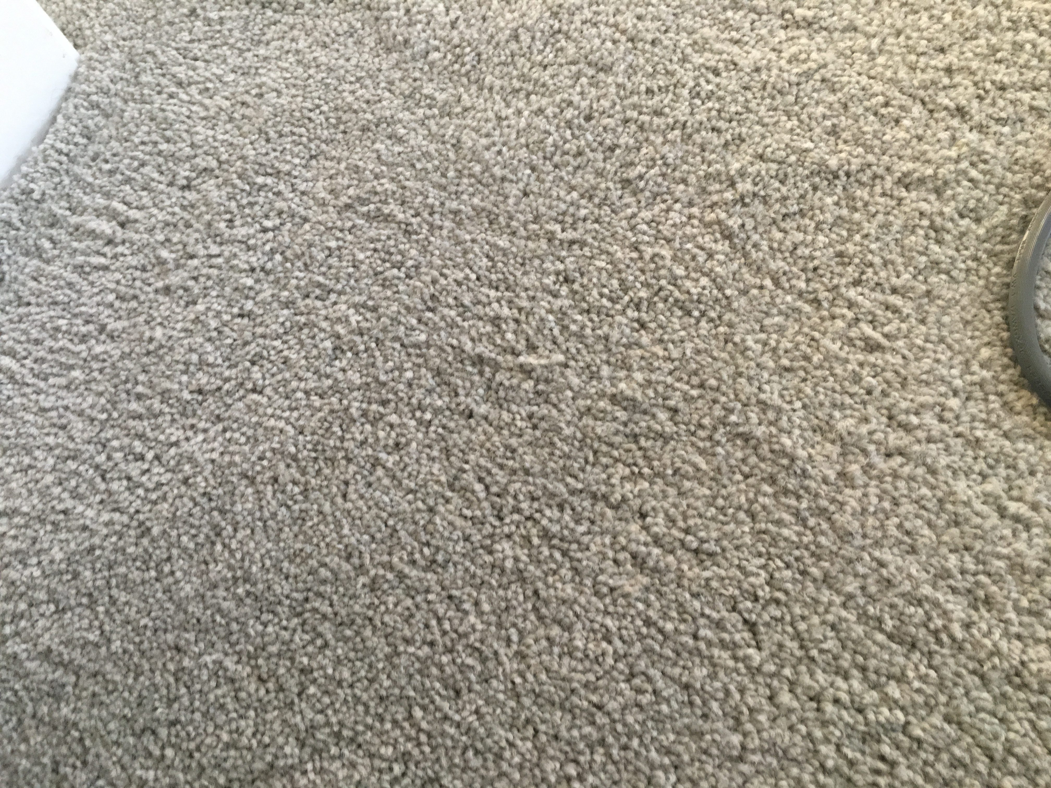 to be top quality carpet stainmaster petprotect baxter iii from - Outdoor Carpet Lowes