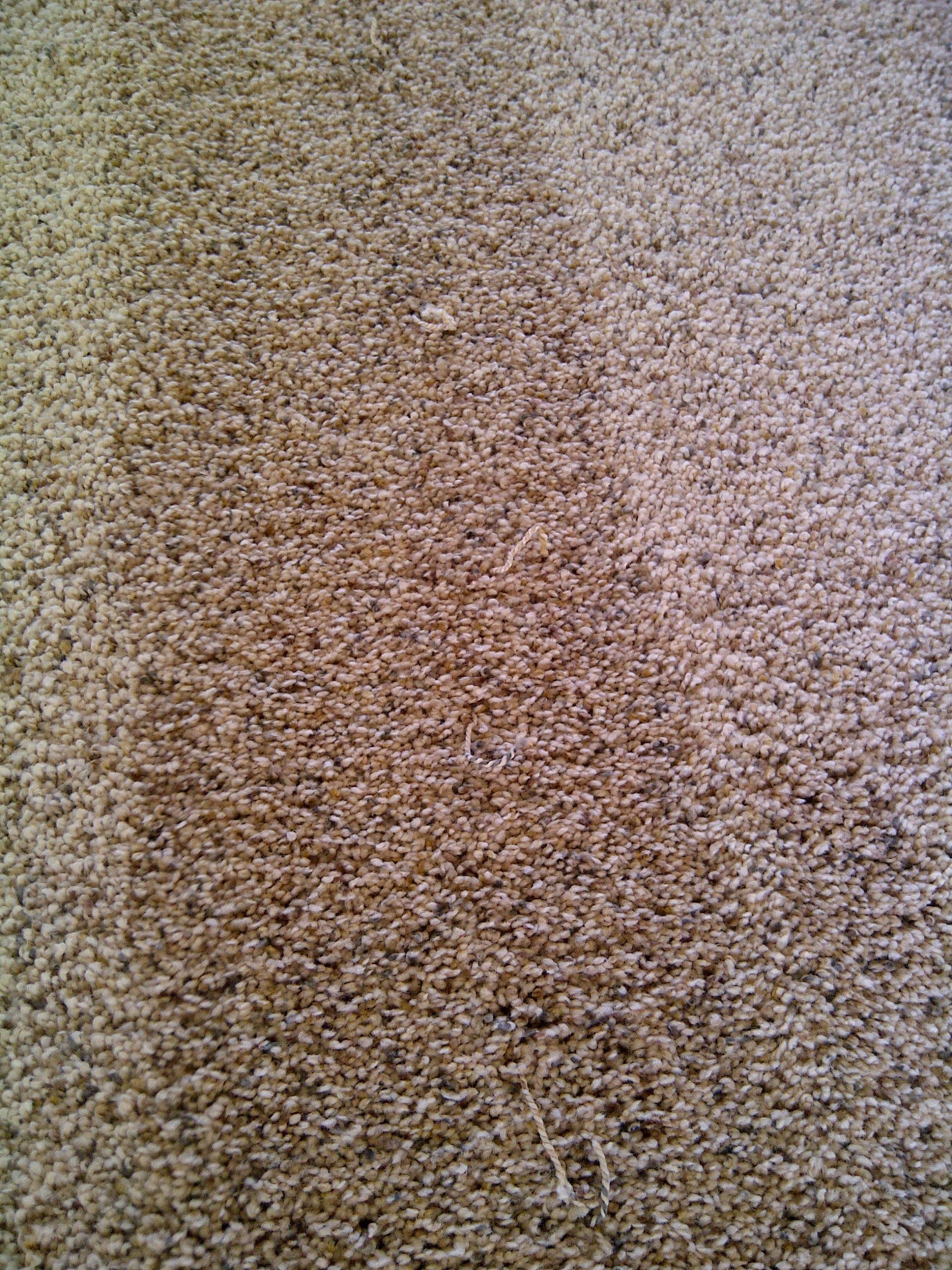 Mohawk Carpet Vacuum Problems Www Stkittsvilla Com