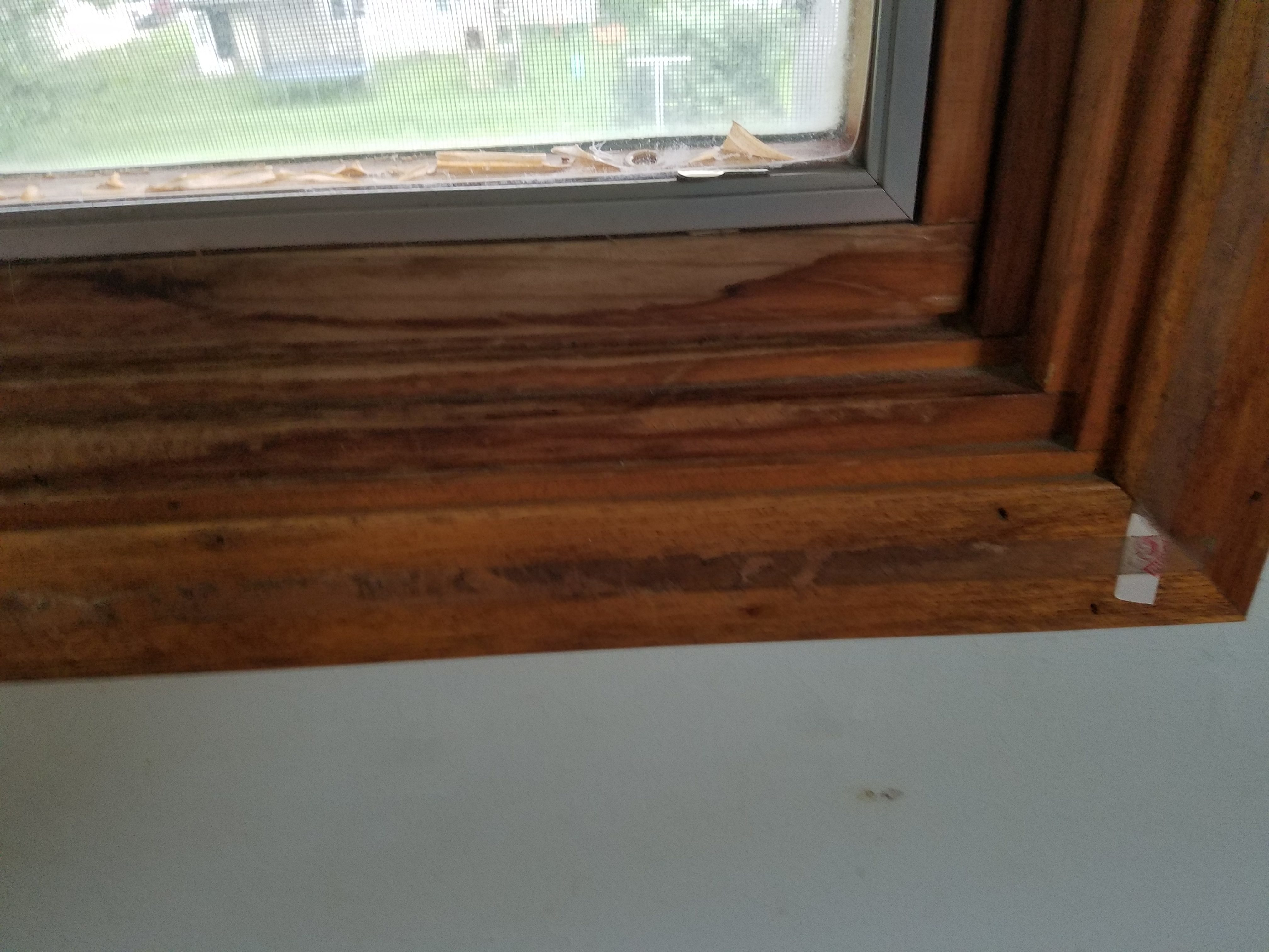 Pella replacement windows lowes perfect stunning pella exterior cheap the previous owners had purchased all new pella wood frame windows directly from the company within years they were leaking and finish was flaking off geenschuldenfo Gallery