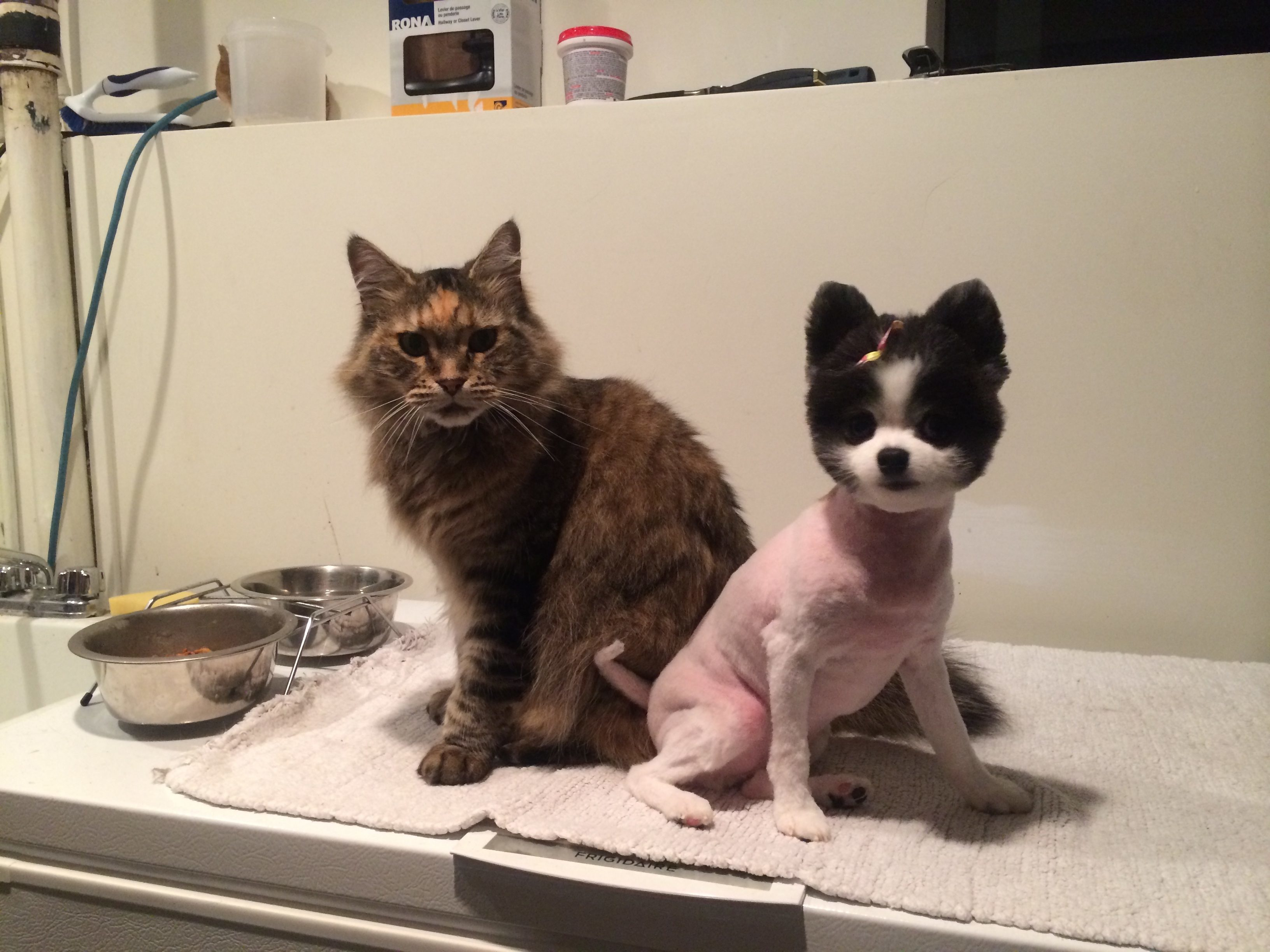 Does Petsmart Dog Grooming On Cats