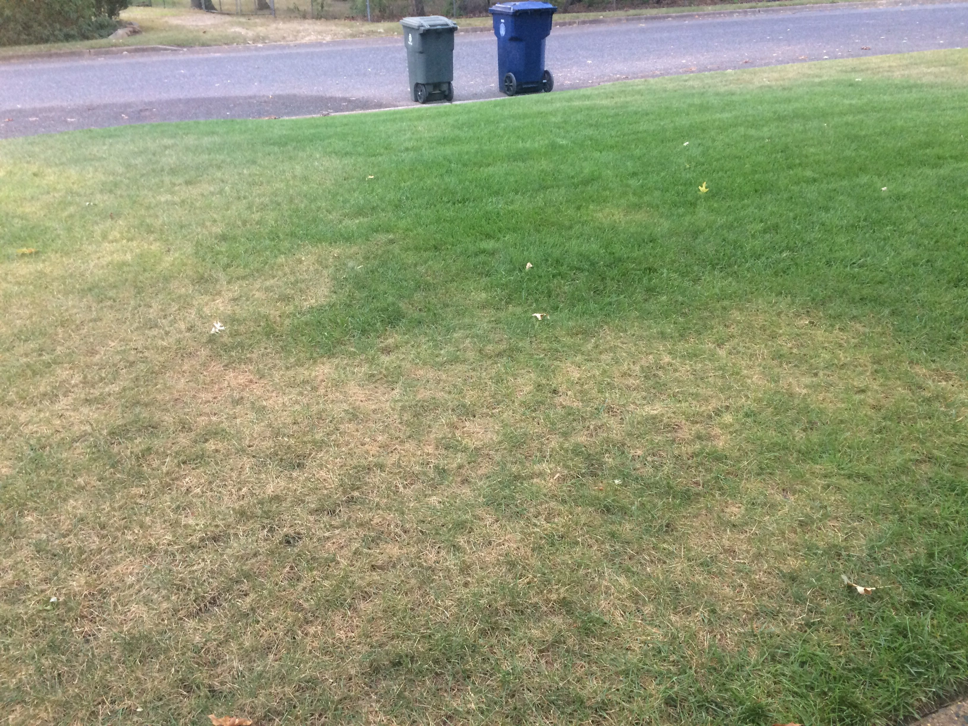 Scotts Lawn Fungus Control Review : Lawn.xcyyxh.com