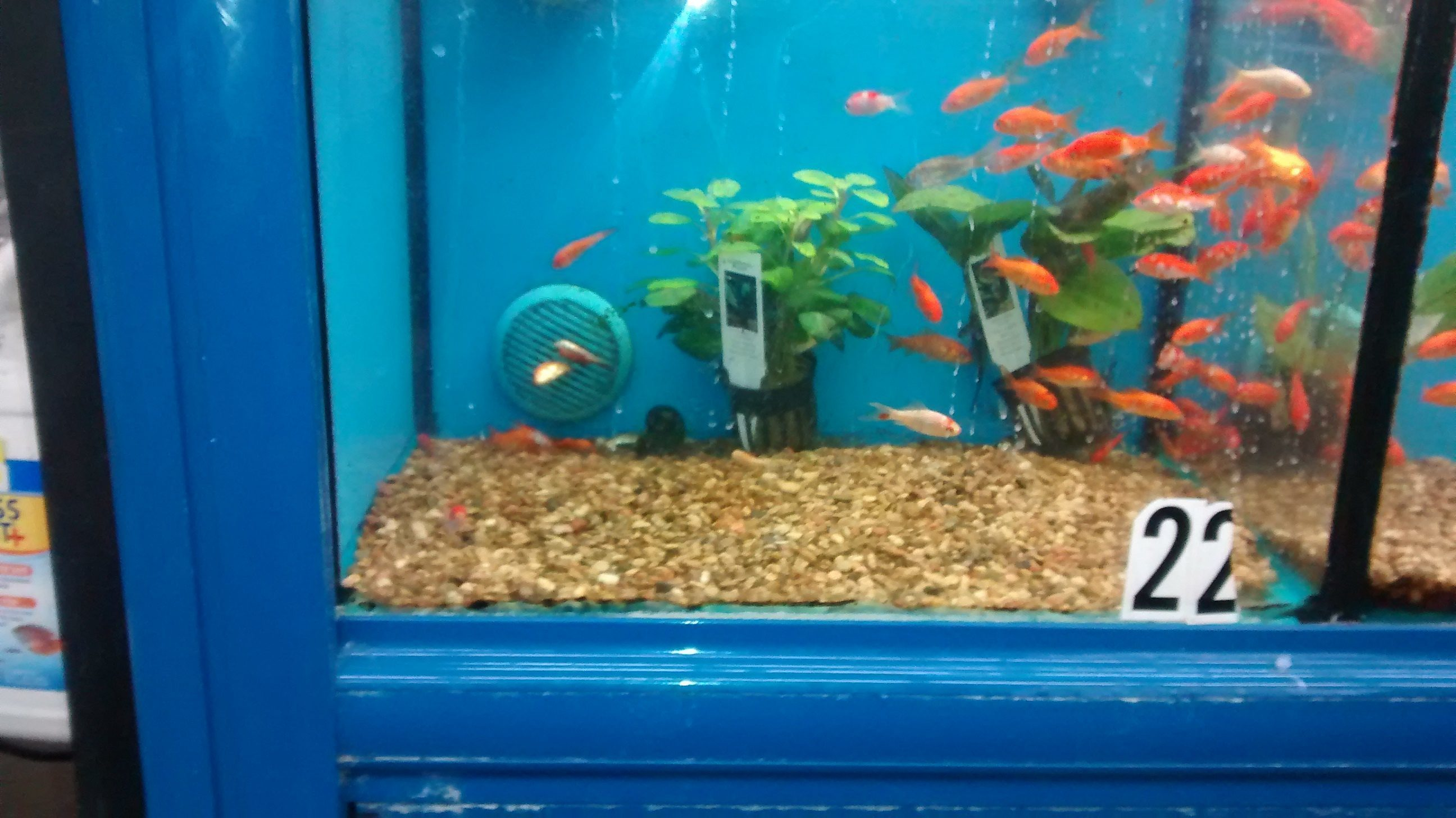 Top 225 complaints and reviews about wal mart pet for Walmart fish supplies