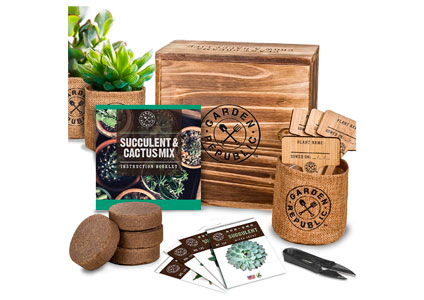 succulent growing kit